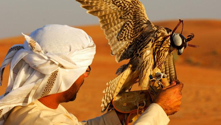 В пустыне Наджаф похищены 16 катарских охотников