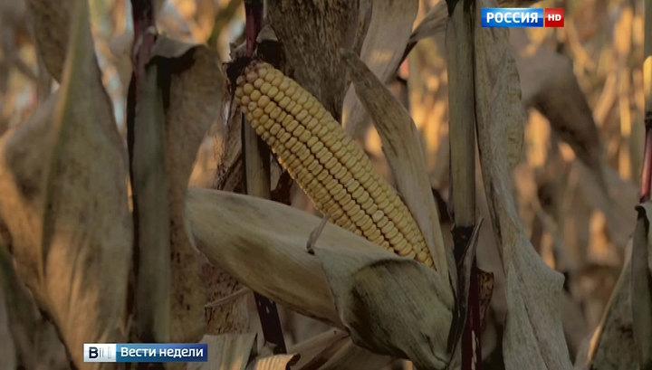 """ГМО-гигант """"Монсанто"""" ставит опыты на украинской земле"""