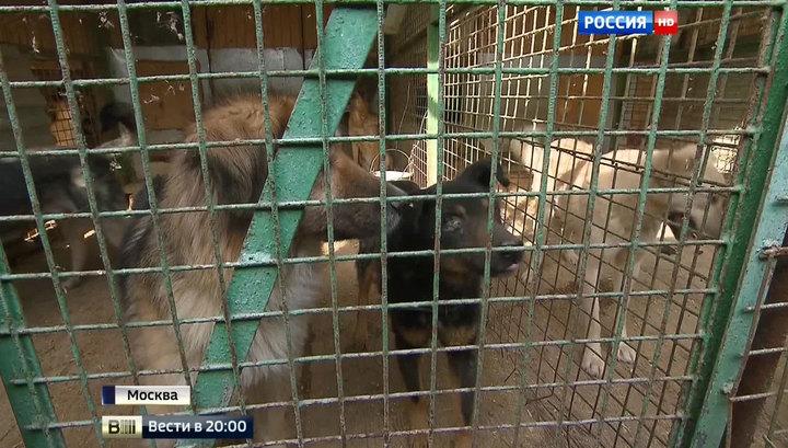 """Битва за приют: к собакам и кошкам """"ЭКО-Вешняки"""" прорвались спасатели-волонтеры"""