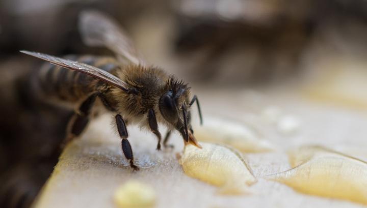 """Первые """"дальневосточные гектары"""" оформили на себя пчеловоды"""