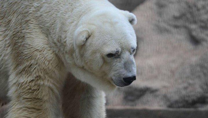 фото грустного медведя