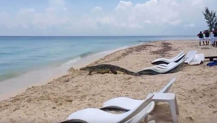 Крокодил на пляже 22