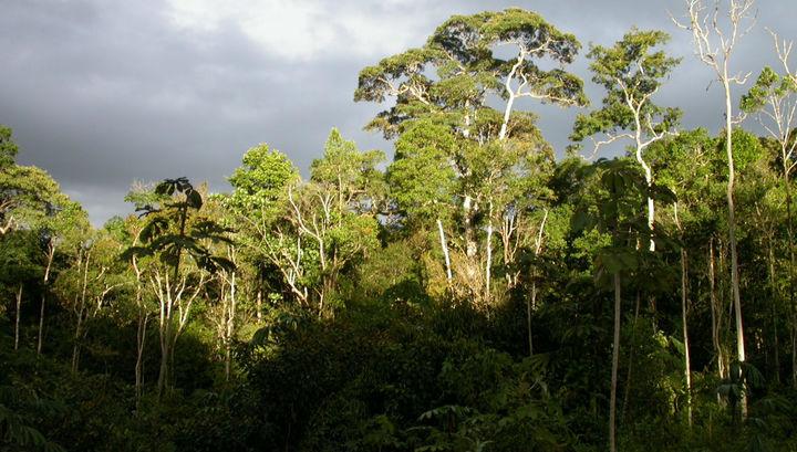 Инвентаризация деревьев Амазонии обнаружила более 11 тысяч описанных и около 4 тысяч неизвестных видов.