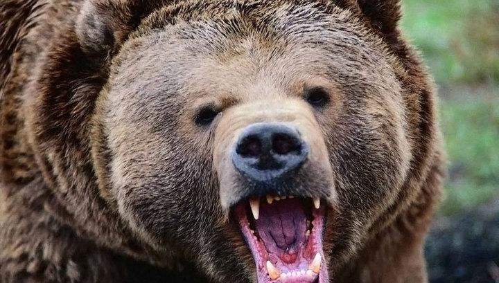 Говорящая мумия: раненый мужчина прожил месяц в берлоге с медведем и остался жив