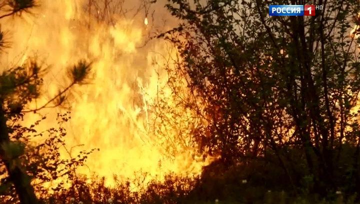 За сутки площадь лесных пожаров в Якутии выросла в 1,5 раза и достигла 31 тысячи гектаров
