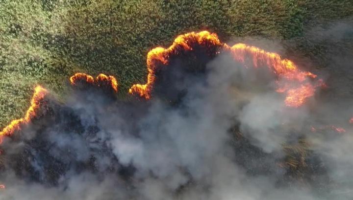 """Эковахта """"Гринпис"""" погорела: экологов обвинили в пожарах на Кубани"""