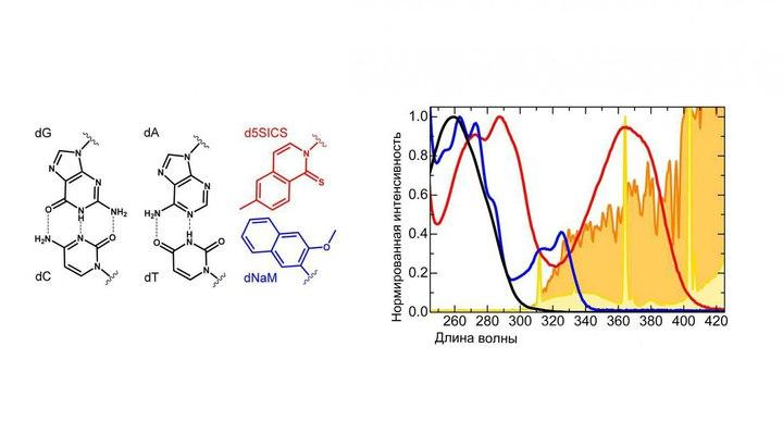 Слева: молекулярная структура естественных пар оснований (чёрные) и искусственных (красная и синяя). Из-за последних бактерия поглощает свет солнца (оранжевый) и флуоресцентной лампы (жёлтый).