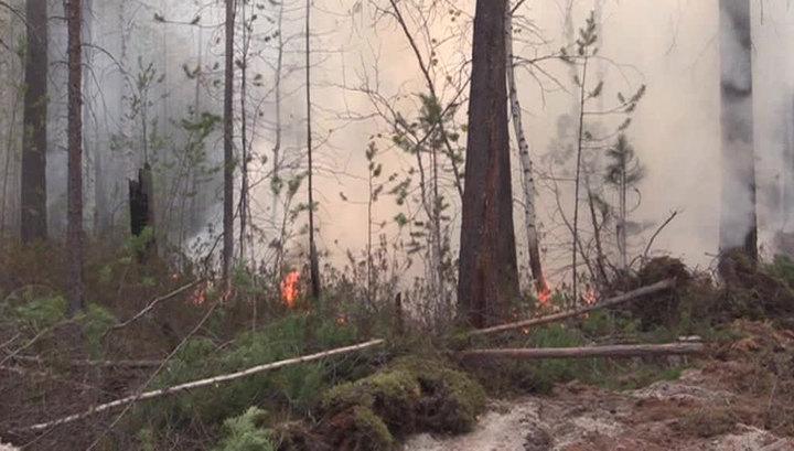 Сгорела половина села: из-за пожаров в Забайкалье ввели режим ЧС