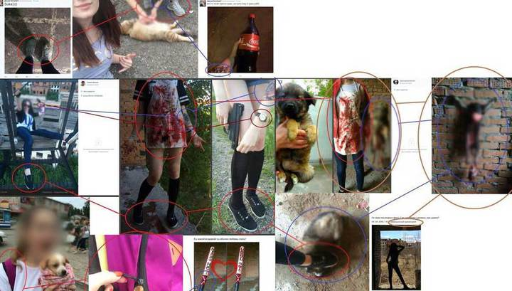 Найдено подтверждение издевательств над животными студенток из Хабаровска