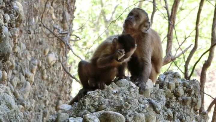 Игра секс 2 человека и обезьяна
