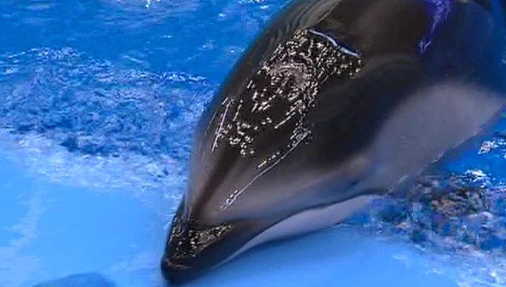 Смерть в океанариуме: следователи пытаются найти убийц дельфинов и сивуча