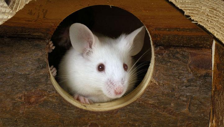 Воздействие света лазера на определённые нейроны изменило поведение мышей.