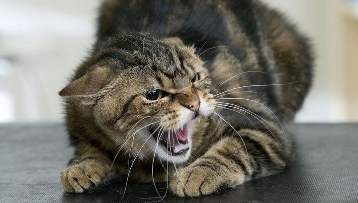 Пожилая японка чудом выжила после нападения разъяренной бродячей кошки