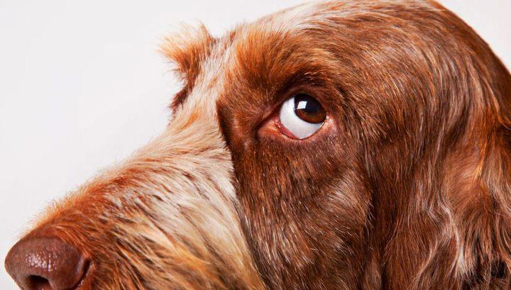 Собаки помнят больше, чем вы думали, и даже всякие глупости