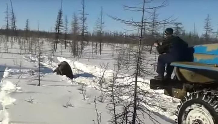 """В Якутии вахтовики намеренно раздавили медведя """"Уралами"""" и добили прутом"""