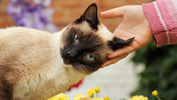 Медики впервые регистрируют инфицирование кошек птичьим гриппом.