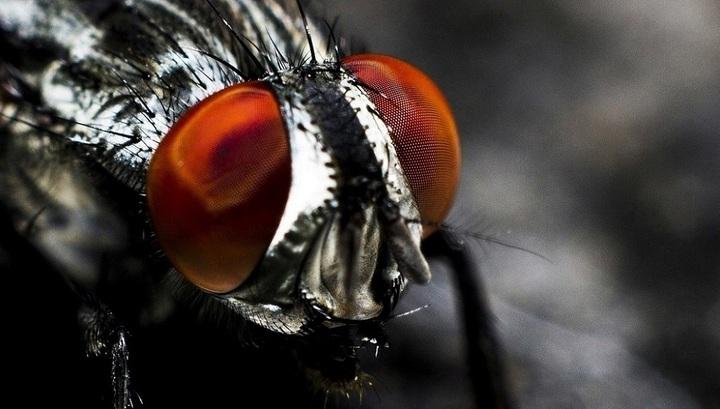Понимание физики полётов насекомых пригодится инженерам при создании дронов.