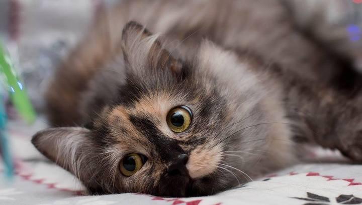 """Кошки-сироты приедут в турклуб """"Перово"""" искать хозяев"""