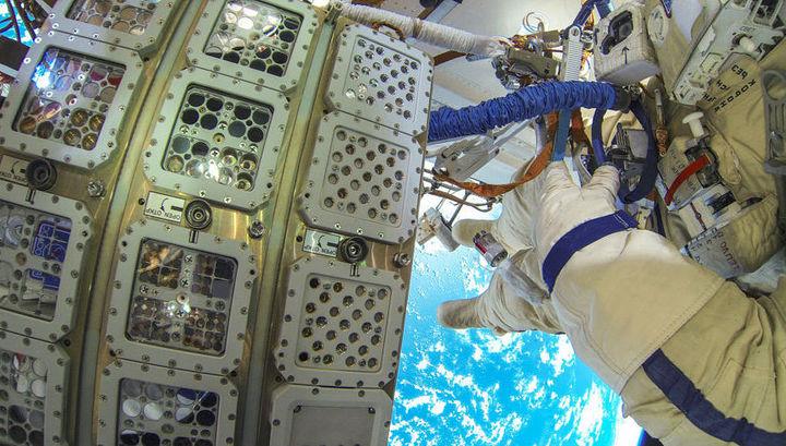 Водоросли провели в открытом космосе 16 месяцев. В итоге не выжил лишь один экземпляр.