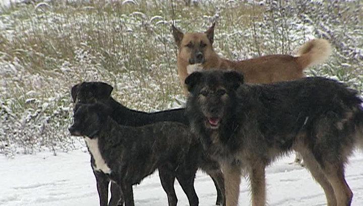Сторожевые псы загрызли мужчину под Волгоградом