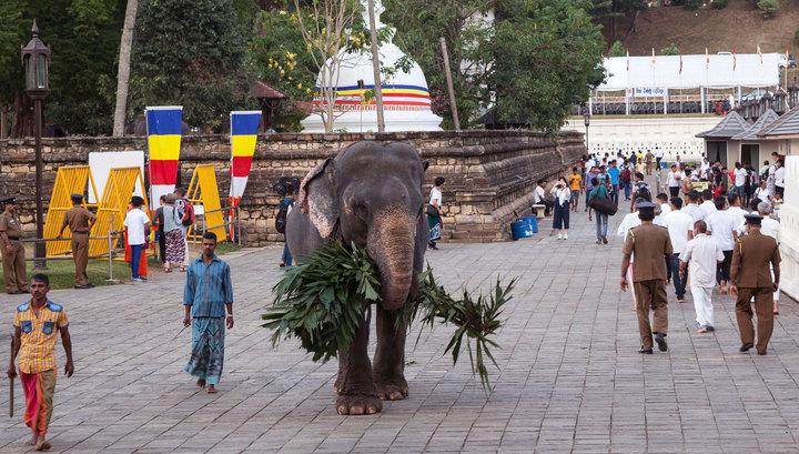 Тысячи туристов бегут со Шри-Ланки. В российских турагентствах отказов нет