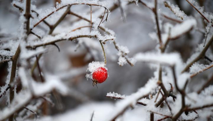 Отрицательная температура: в Москву идет зима