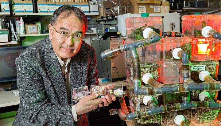 """Руководитель исследования Тед Шульц и его """"подопечные"""" – муравьи, которые занимаются разведением грибных плантаций."""