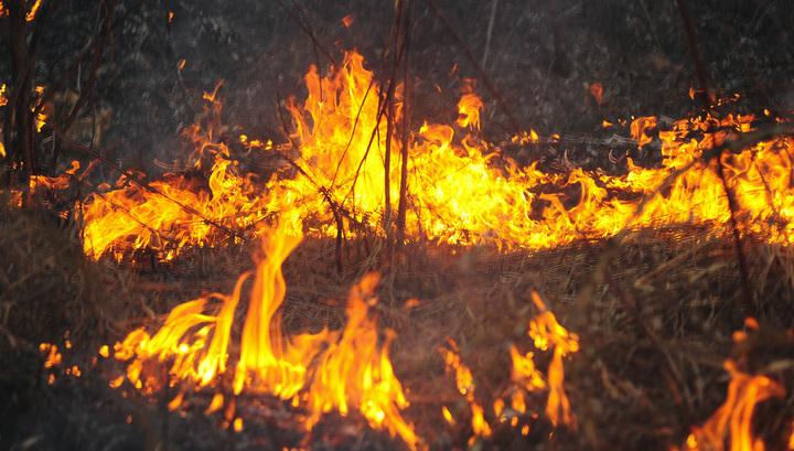 Во Владимирской области горят полтысячи гектаров леса