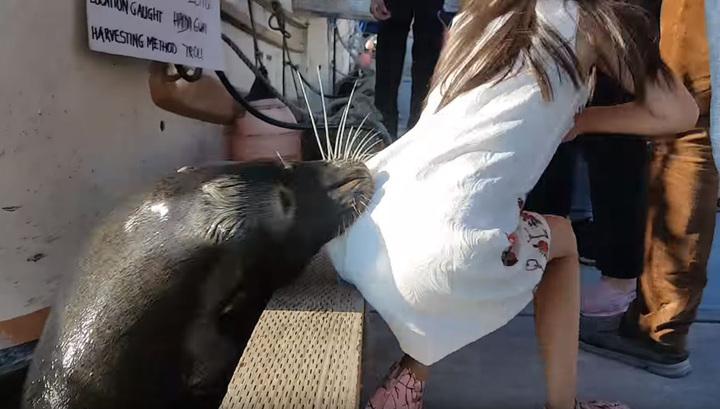 В Канаде морской лев схватил ребенка и утащил под воду. Видео