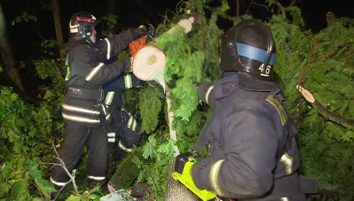 Сорванные провода и упавшие деревья: коммунальщики восстанавливают Москву после урагана