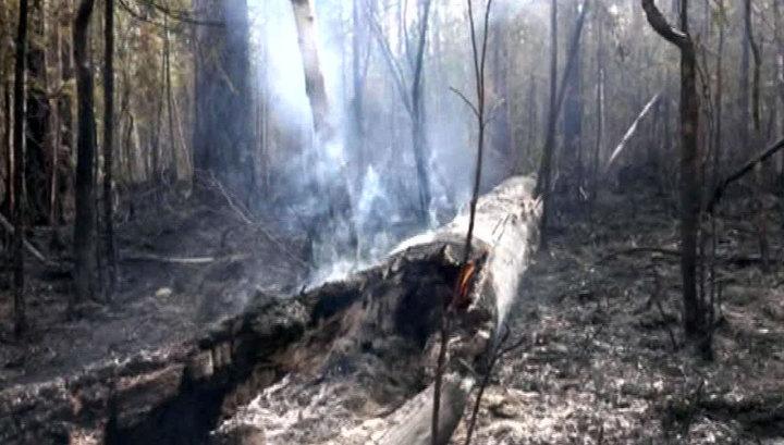 В Иркутской области тушат крупный лесной пожар