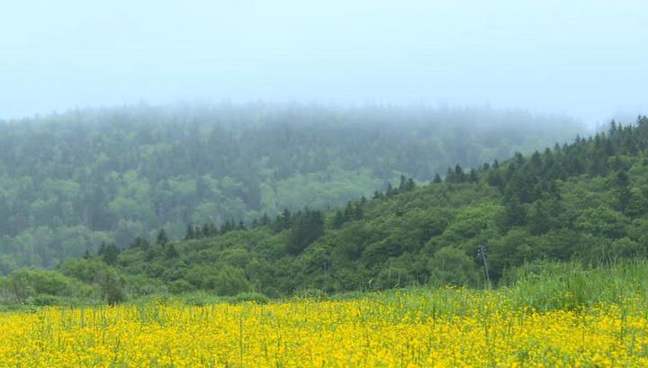 Дальневосточные гектары будут давать зарубежным соотечественникам