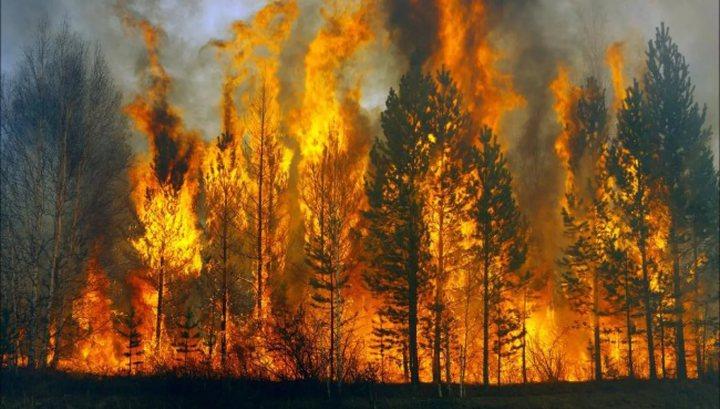 В Забайкалье потушен крупный лесной пожар