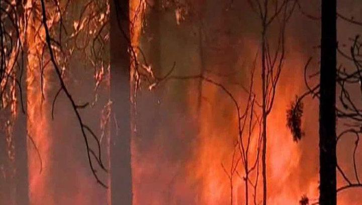 В Забайкалье площадь лесных пожаров за сутки выросла в два раза