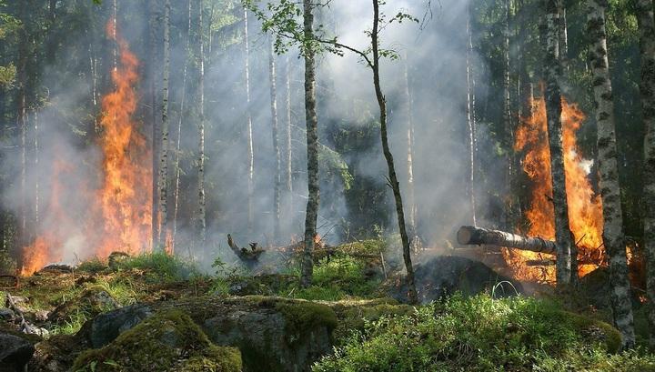 Леса на всей территории России продолжают гореть