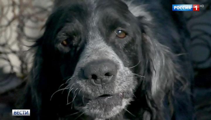 В Швейцарии запретили мешать собакам лаять и варить раков живьем