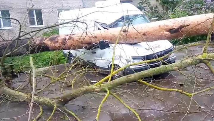 Московские ураганы: кто виноват? что делать?