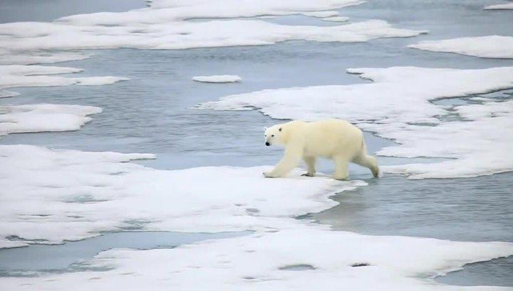 """Белые медведи помешали Alter Ego найти """"Святую Анну"""""""