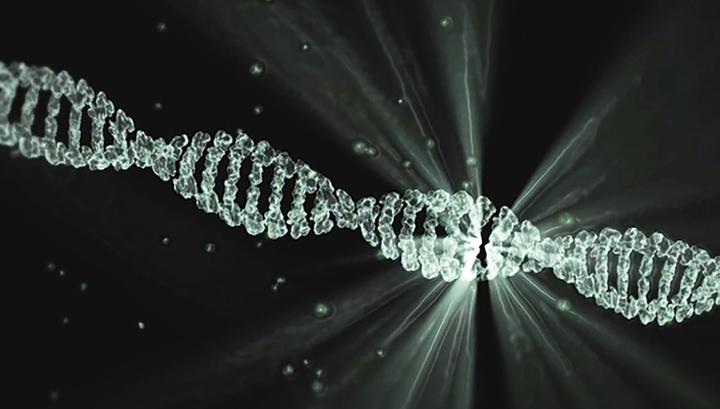 Открыт важнейший для иммунитета ген возрастом 500 миллионов лет