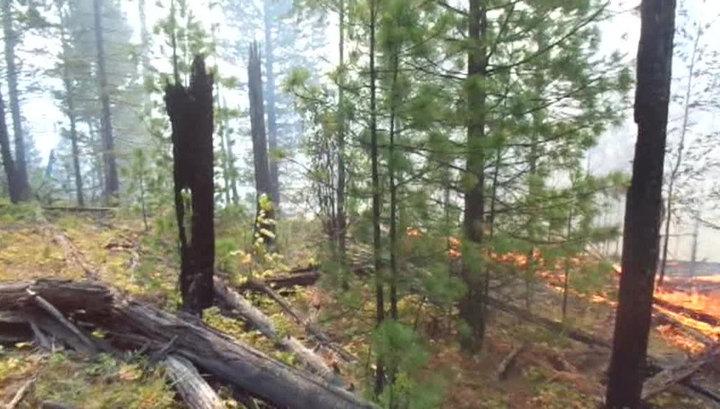 В Приморье полыхают два крупных лесных пожара