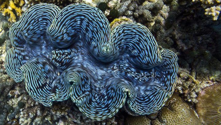 синие водоросли в истории