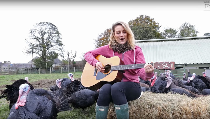 Фермерша играет для индеек на гитаре, чтобы те лучше неслись