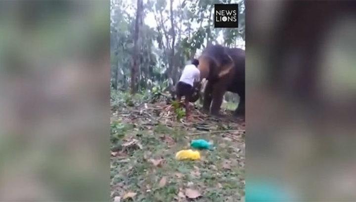 Слон подбросил в воздух подростка, который пытался на него залезть. Видео