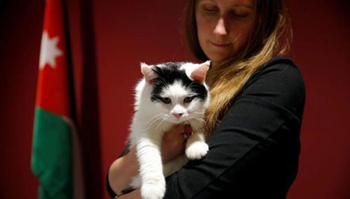 В Иордании впервые взяли на госслужбу кота