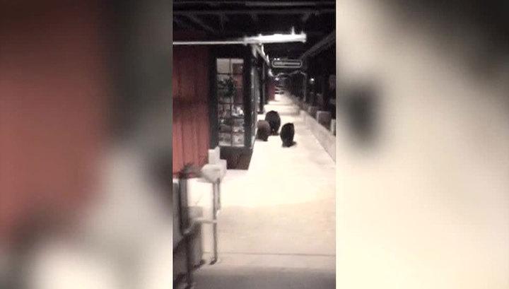 Торговый центр Калифорнии посетили медведи. Видео