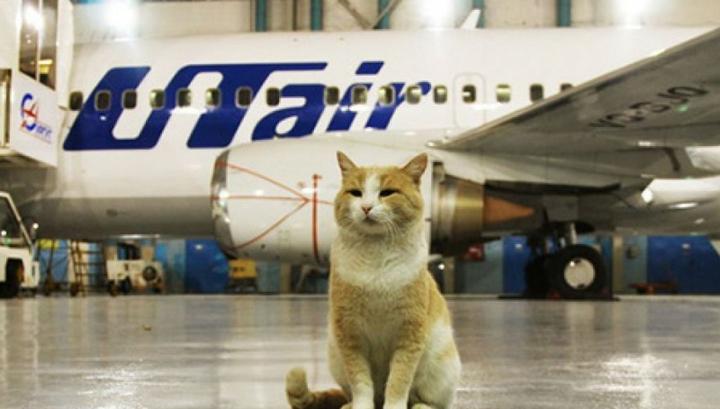 Кота из Гонконга не пустили в Россию
