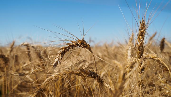 Литовский депутат требует прекратить импорт зерна из