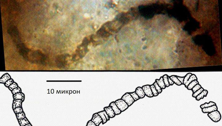 Палеонтологи отыскали наЗемле следы существ, живших 3,5 млрд лет назад