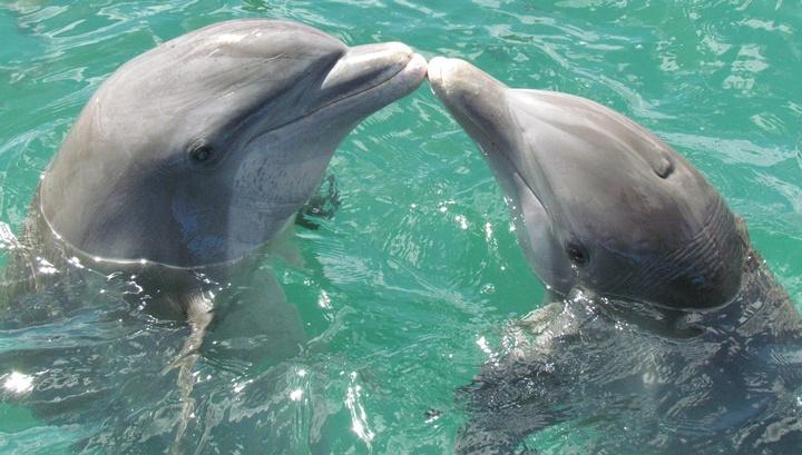 Удовольствие от секса получают дельфины