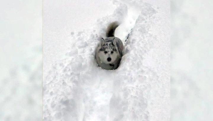 Штат Пенсильвания засыпало снегом почти на полтора метра